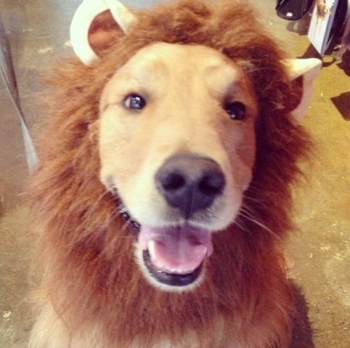 Dog Lion Costume Halloween