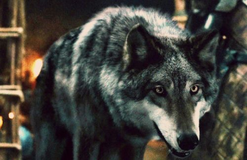 Game of Thrones Direwolves Costumes
