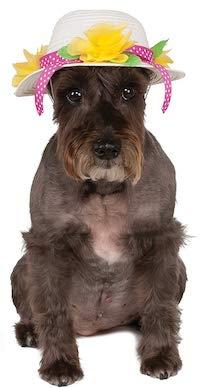 Easter Pet Costume - Spring Hat