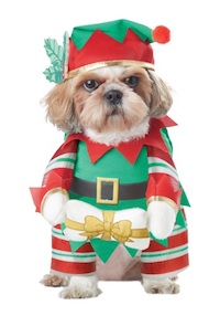 Christmas Dog Costume - Elf