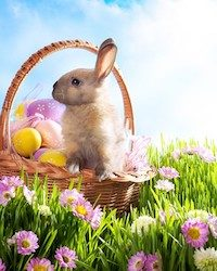 Easter Bunny Costumes for Kids