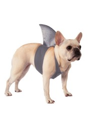 Baby Shark Costume Ideas - Doggy Shark