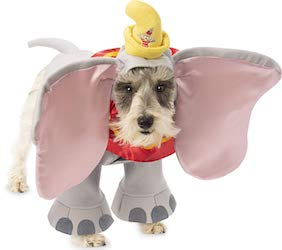 Dumbo Costume Ideas for Adults, Kids and Pets
